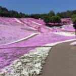芝桜アイキャッチ画像