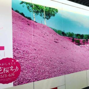 芝桜まつりイメージ写真